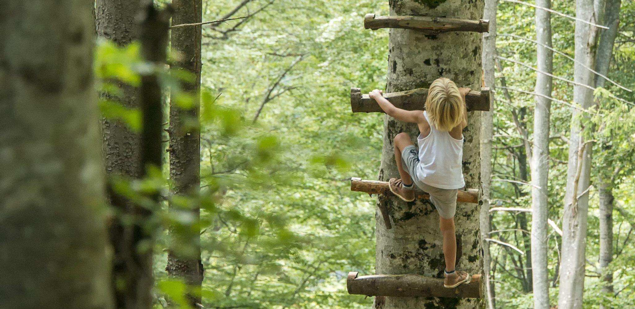 enfant dans forêt
