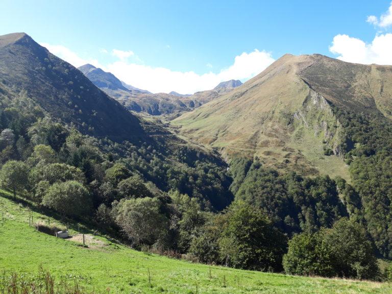 Forêt des Pyrénées image